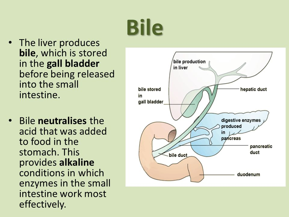 Bile The liver produces bile, which is stored in the gall bladder before being released into the small intestine.