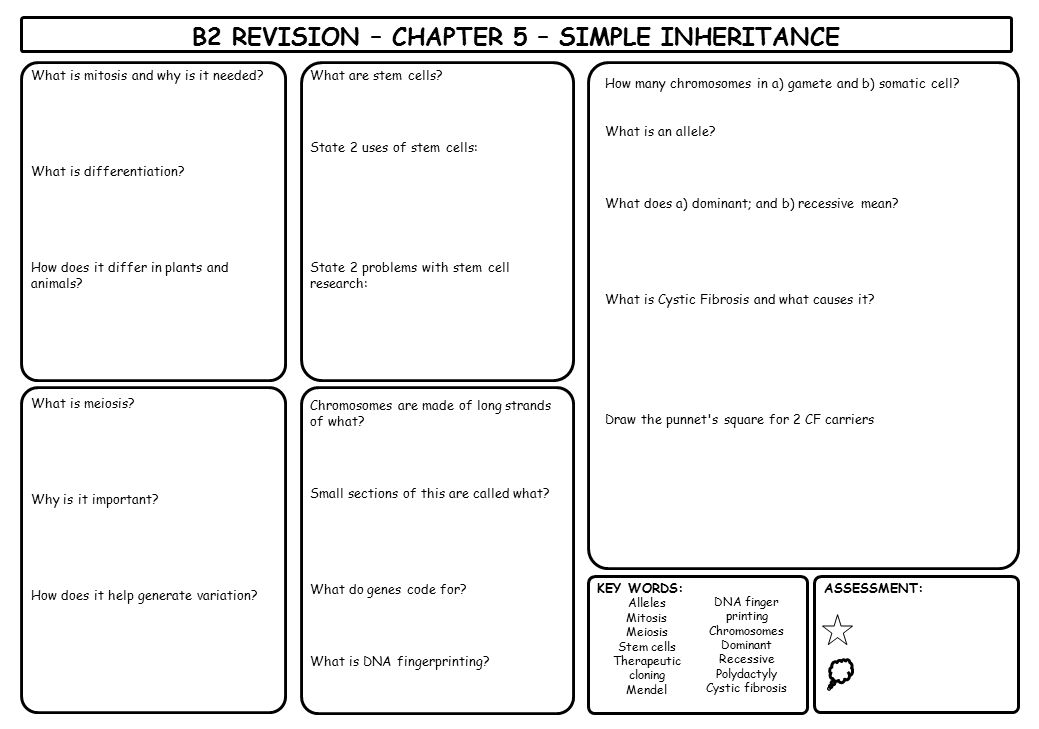 B2 REVISION – CHAPTER 5 – SIMPLE INHERITANCE KEY WORDS: Alleles Mitosis Meiosis Stem cells Therapeutic cloning Mendel DNA finger printing Chromosomes
