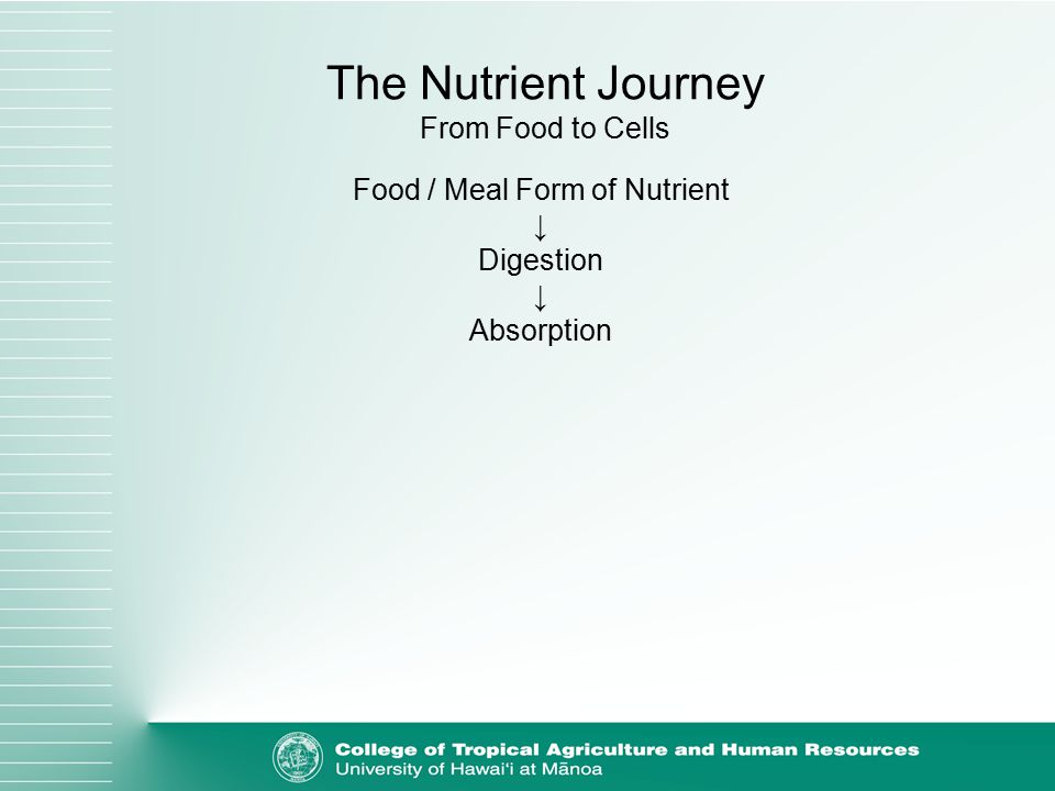 Food / Meal Form of Nutrient ↓ Digestion ↓ Absorption The Nutrient Journey From Food to Cells