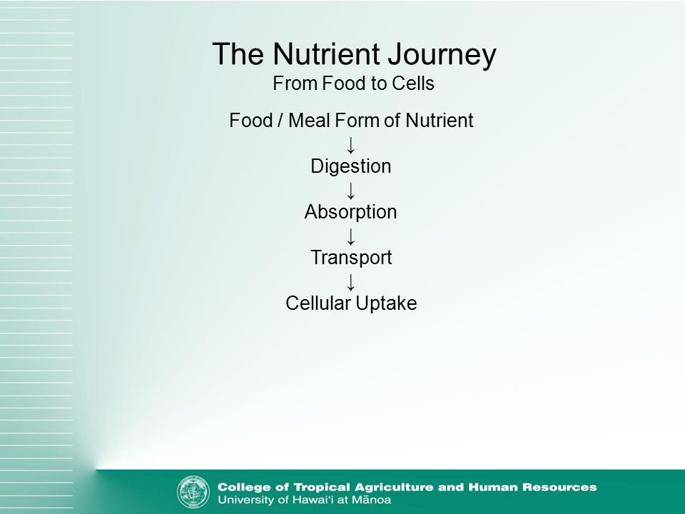 Food / Meal Form of Nutrient ↓ Digestion ↓ Absorption ↓ Transport ↓ Cellular Uptake The Nutrient Journey From Food to Cells