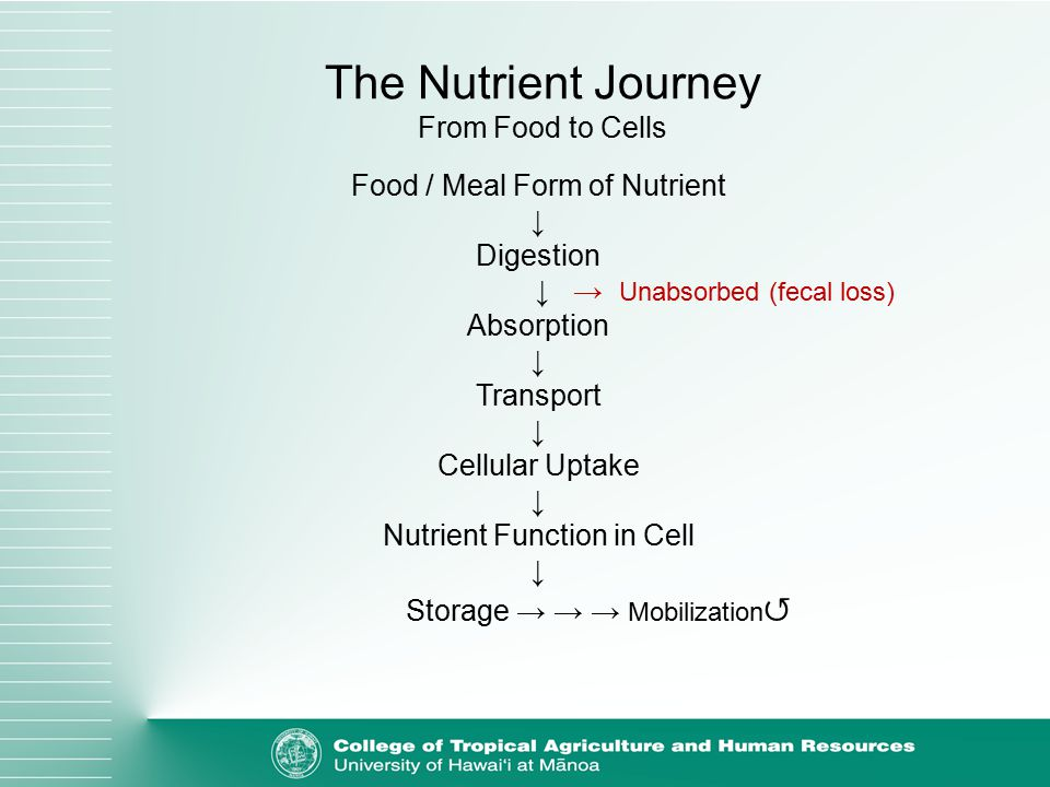 Food / Meal Form of Nutrient ↓ Digestion ↓ → Unabsorbed (fecal loss) Absorption ↓ Transport ↓ Cellular Uptake ↓ Nutrient Function in Cell ↓ Storage → → → Mobilization ↺ The Nutrient Journey From Food to Cells