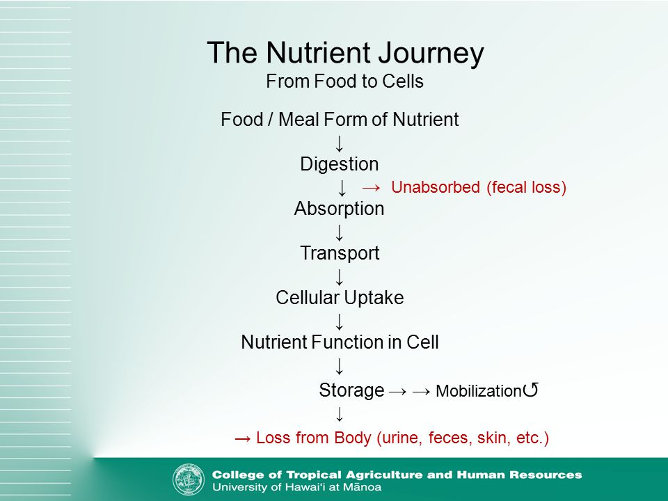 Food / Meal Form of Nutrient ↓ Digestion ↓ → Unabsorbed (fecal loss) Absorption ↓ Transport ↓ Cellular Uptake ↓ Nutrient Function in Cell ↓ Storage → → Mobilization ↺ ↓ → Loss from Body (urine, feces, skin, etc.) The Nutrient Journey From Food to Cells