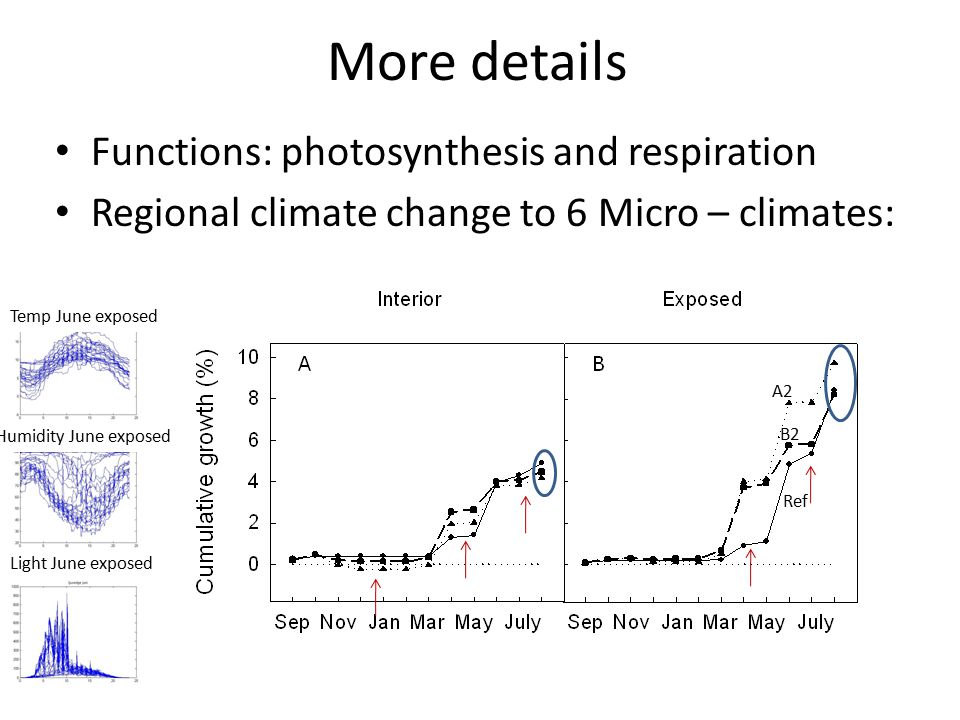 More details Functions: photosynthesis and respiration Regional climate change to 6 Micro – climates: Temp June exposed Humidity June exposed Light June exposed A2 B2 Ref