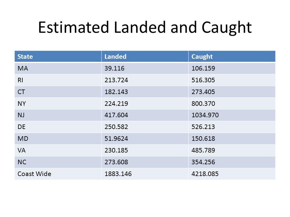 Estimated Landed and Caught StateLandedCaught MA39.116106.159 RI213.724516.305 CT182.143273.405 NY224.219800.370 NJ417.6041034.970 DE250.582526.213 MD