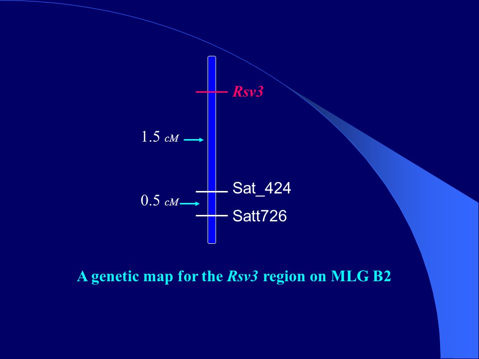 Rsv3 Sat_424 Satt726 A genetic map for the Rsv3 region on MLG B2 1.5 cM 0.5 cM