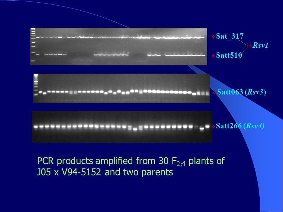 PCR products amplified from 30 F 2:4 plants of J05 x V94-5152 and two parents  Satt063 (Rsv3)  Sat_317  Satt510  Rsv1  Satt266 (Rsv4)