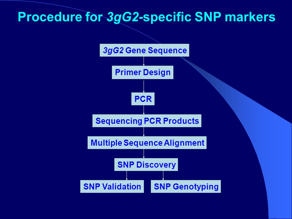 3gG2 Gene Sequence Primer Design PCR Sequencing PCR Products Multiple Sequence Alignment SNP Discovery SNP ValidationSNP Genotyping Procedure for 3gG2-specific SNP markers