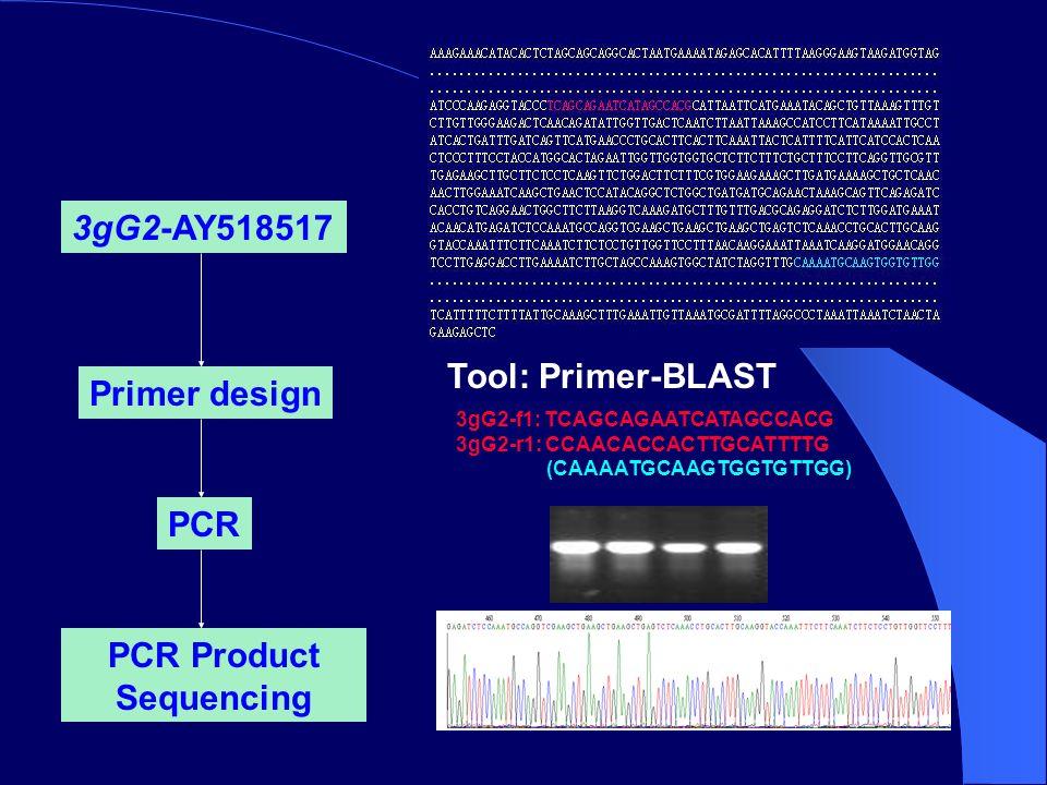 3gG2-AY518517 Primer design Tool: Primer-BLAST PCR PCR Product Sequencing 3gG2-f1: TCAGCAGAATCATAGCCACG 3gG2-r1: CCAACACCACTTGCATTTTG (CAAAATGCAAGTGGTGTTGG)