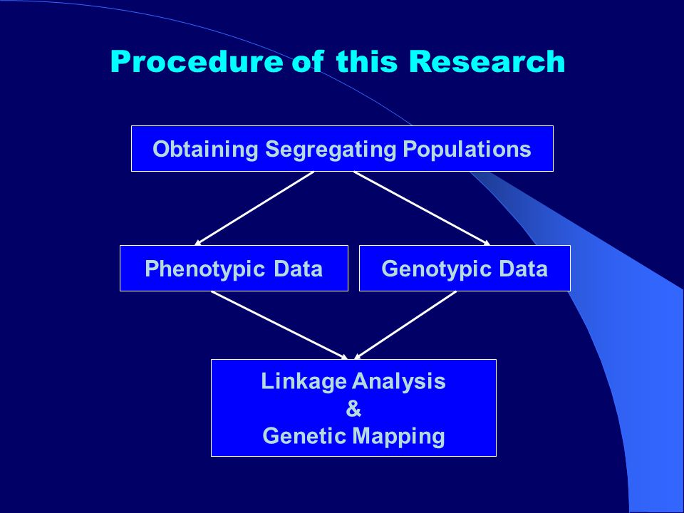 Linkage Analysis & Genetic Mapping Procedure of this Research Genotypic Data Obtaining Segregating Populations Phenotypic Data
