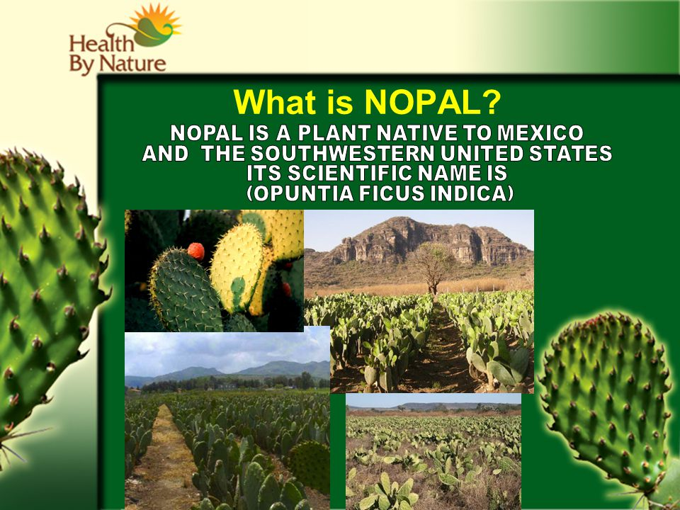 What is NOPAL