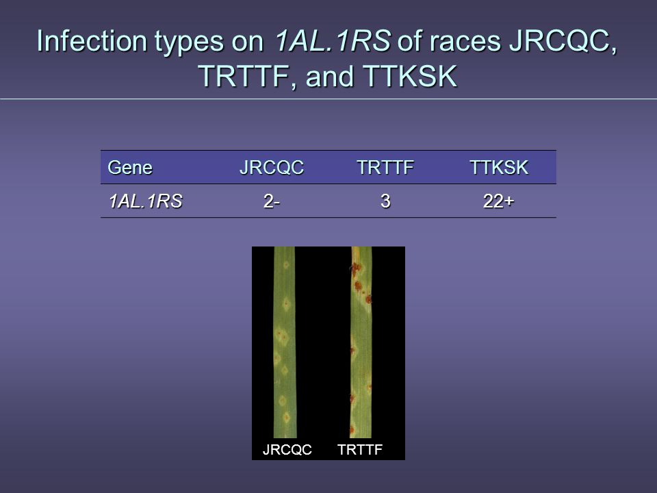 Race TRTTF ● Race TRTTF was first found in a collection from Yemen in 2006 ● TRTTF is similar to race RRTTF that was found from stem rust collections from Pakistan collections from Pakistan ● Race RRTTF is avirulent to Sr9e and 1AL.1RS translocation