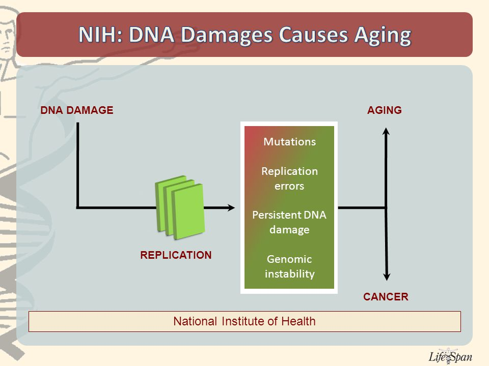 Mutations Replication errors Persistent DNA damage Genomic instability DNA DAMAGE REPLICATION AGING CANCER National Institute of Health