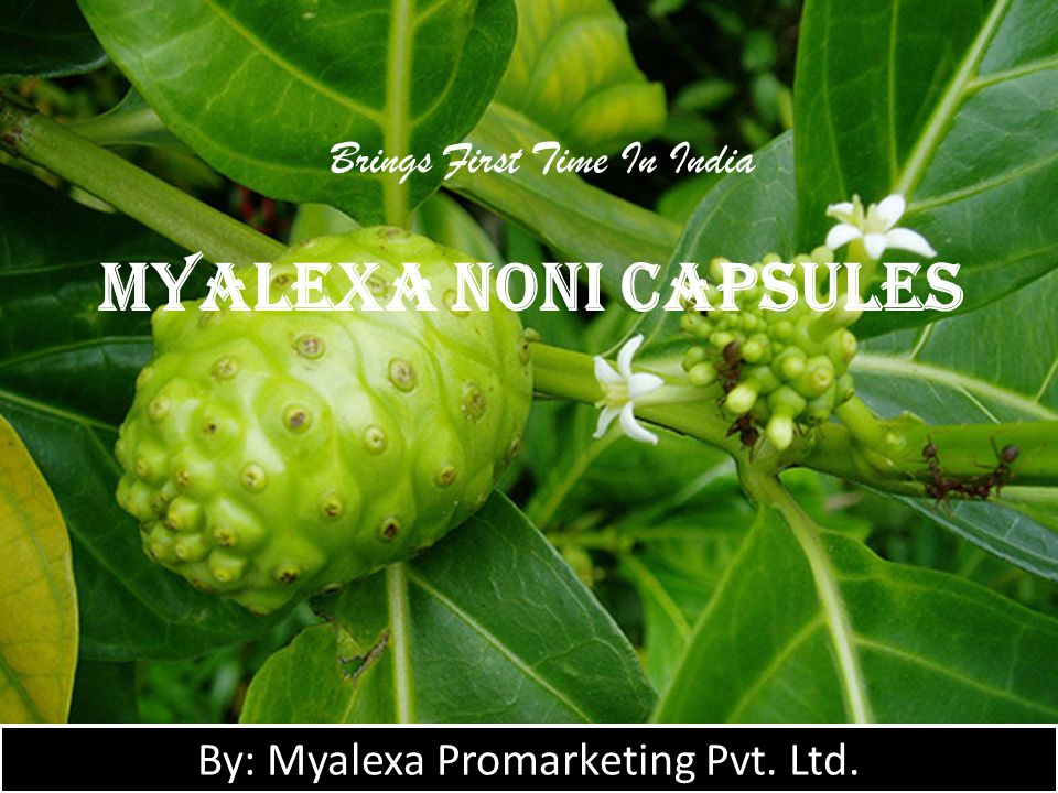  100% natural  HALAL & KOSHER Certified  Produced under International GMP regulations Why Myalexa Noni H