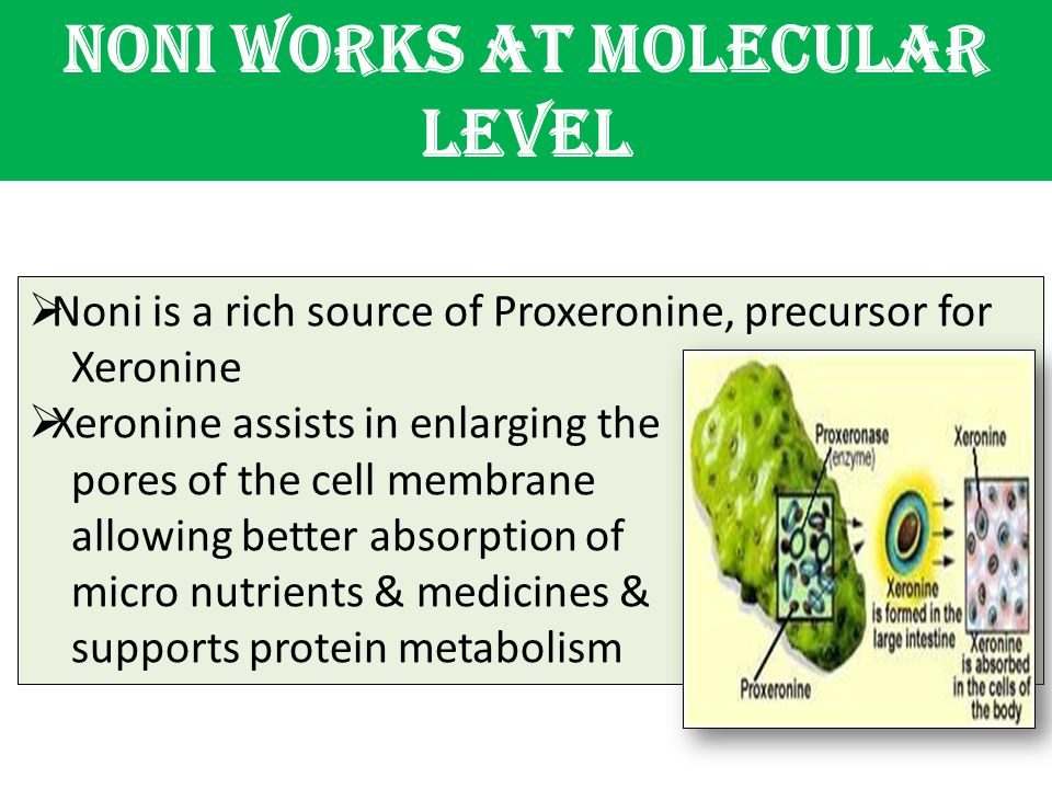 Noni works at molecular level  Noni is a rich source of Proxeronine, precursor for Xeronine  Xeronine assists in enlarging the pores of the cell mem
