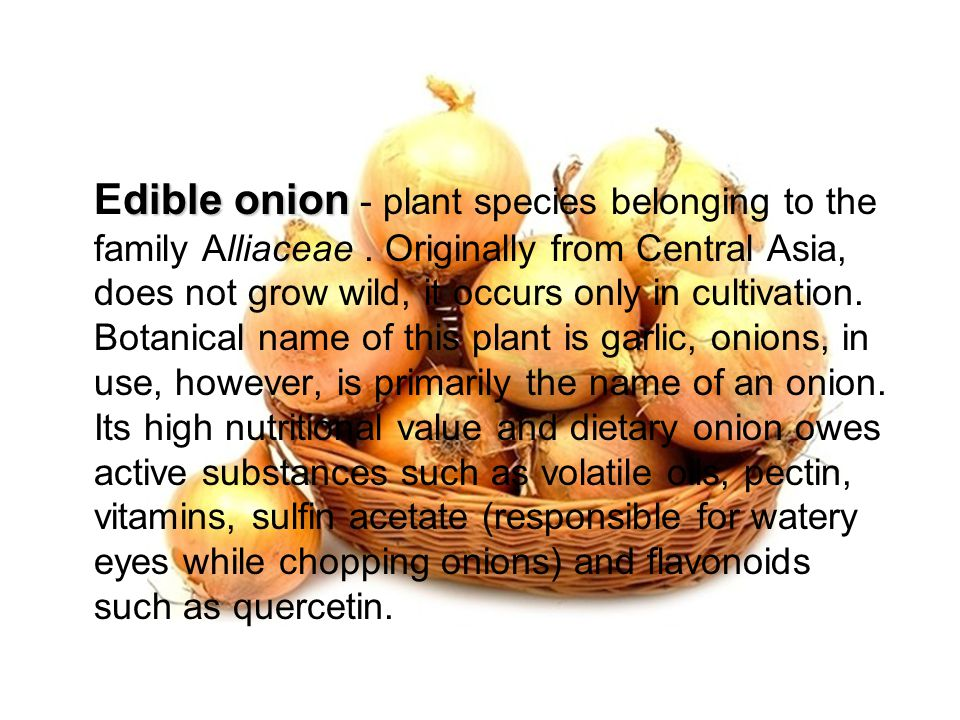 Onion – properties Onion has antimicrobial properties, diuretic and stimulating peristalsis.