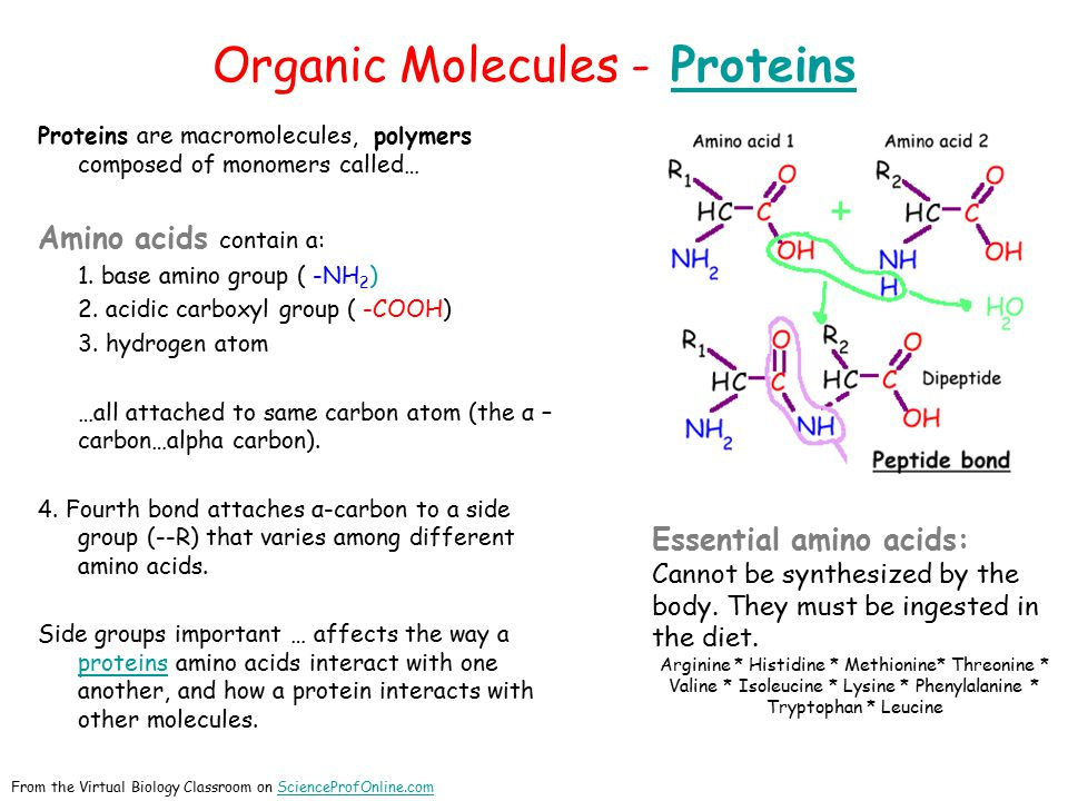 Organic Molecules - ProteinsProteins Proteins are macromolecules, polymers composed of monomers called… Amino acids contain a: 1.