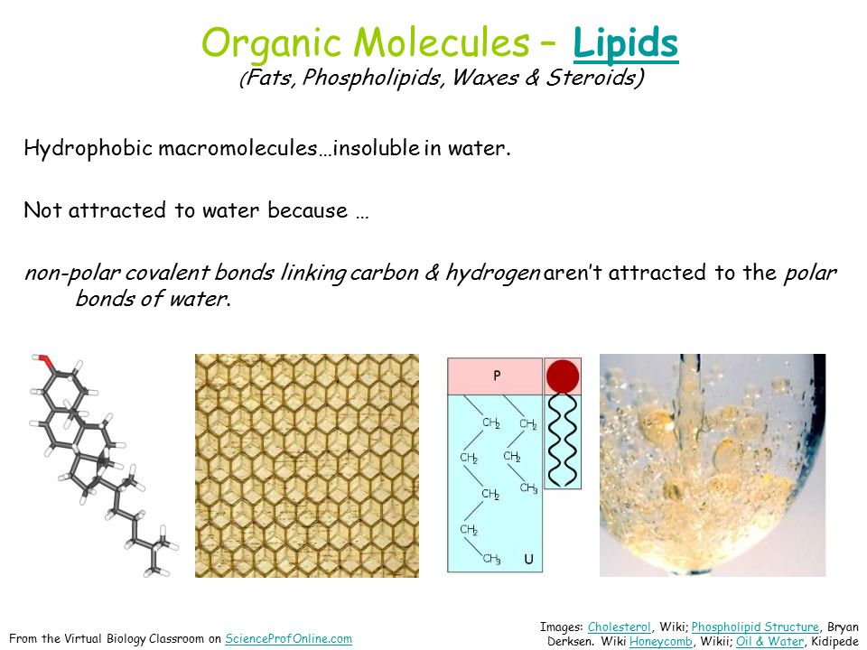 Organic Molecules – Lipids ( Fats, Phospholipids, Waxes & Steroids)Lipids Hydrophobic macromolecules…insoluble in water.