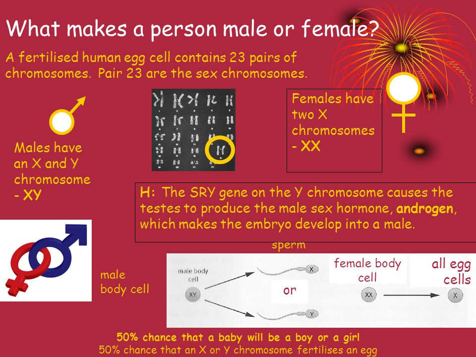 What makes a person male or female.A fertilised human egg cell contains 23 pairs of chromosomes.