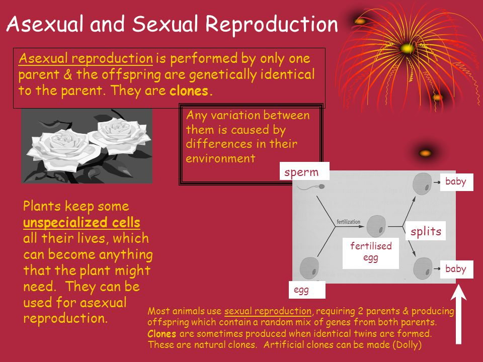Asexual and Sexual Reproduction Asexual reproduction is performed by only one parent & the offspring are genetically identical to the parent.