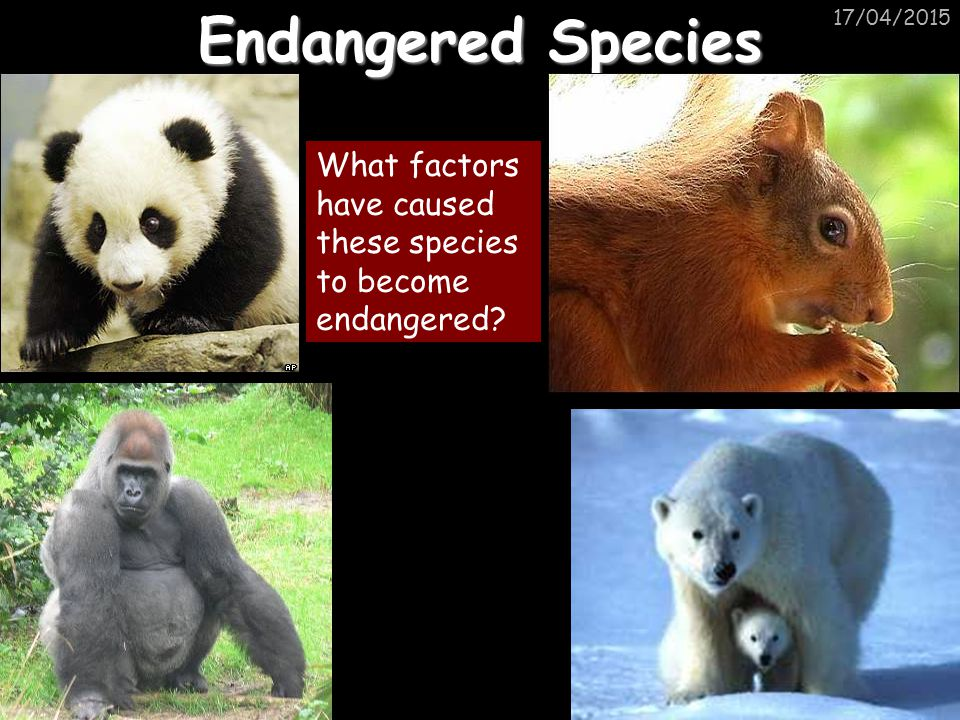 17/04/2015 Endangered Species What factors have caused these species to become endangered?