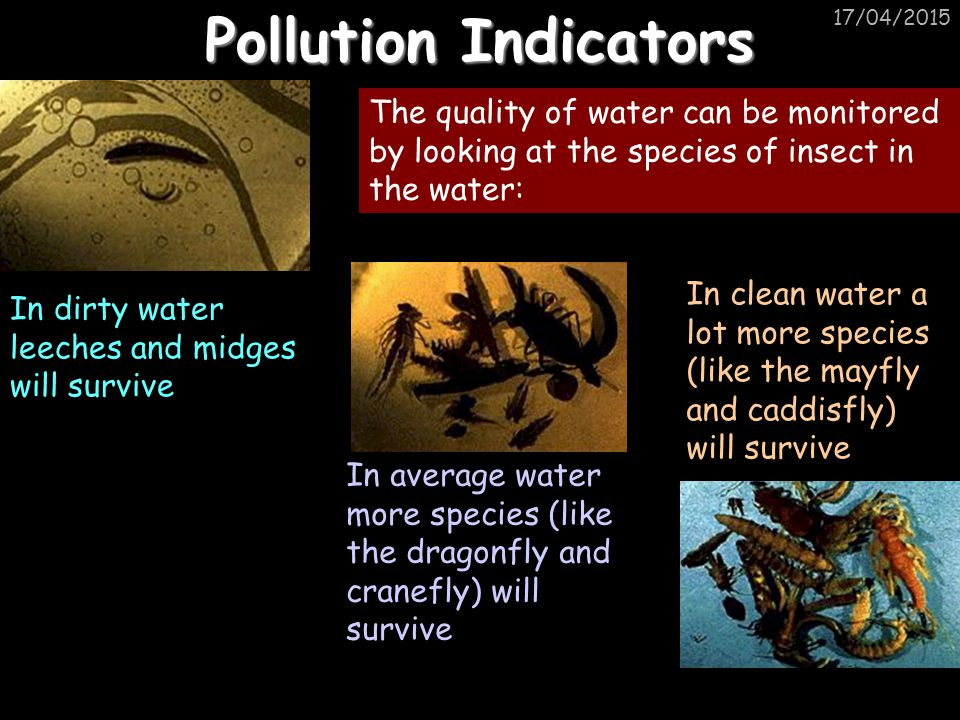 17/04/2015 Pollution Indicators In dirty water leeches and midges will survive In average water more species (like the dragonfly and cranefly) will su