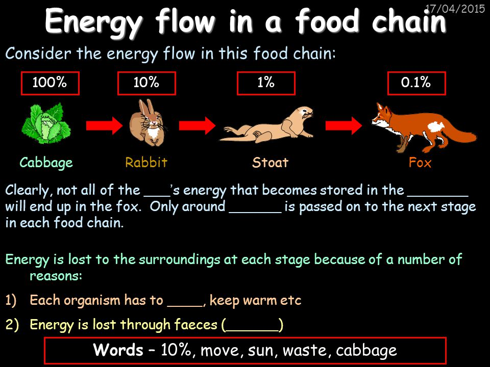 17/04/2015 Energy flow in a food chain Consider the energy flow in this food chain: CabbageRabbitStoatFox 100%10%1%0.1% Clearly, not all of the ___ '