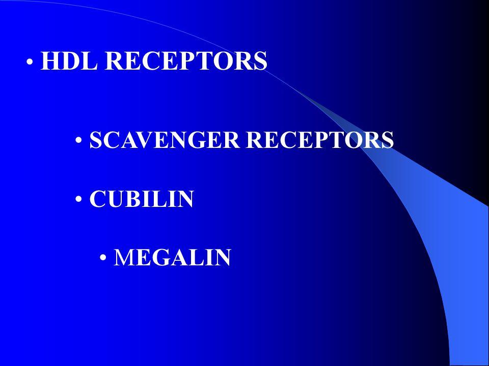 HDL RECEPTORS SCAVENGER RECEPTORS CUBILIN MEGALIN