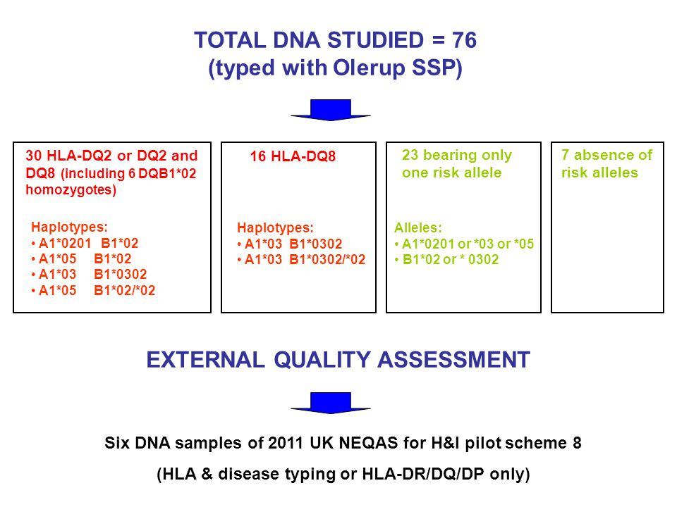 TOTAL DNA STUDIED = 76 (typed with Olerup SSP) 30 HLA-DQ2 or DQ2 and DQ8 (including 6 DQB1*02 homozygotes) Haplotypes: A1*0201 B1*02 A1*05 B1*02 A1*03 B1*0302 A1*05 B1*02/*02 16 HLA-DQ8 Haplotypes: A1*03 B1*0302 A1*03 B1*0302/*02 23 bearing only one risk allele Alleles: A1*0201 or *03 or *05 B1*02 or * 0302 7 absence of risk alleles EXTERNAL QUALITY ASSESSMENT Six DNA samples of 2011 UK NEQAS for H&I pilot scheme 8 (HLA & disease typing or HLA-DR/DQ/DP only)