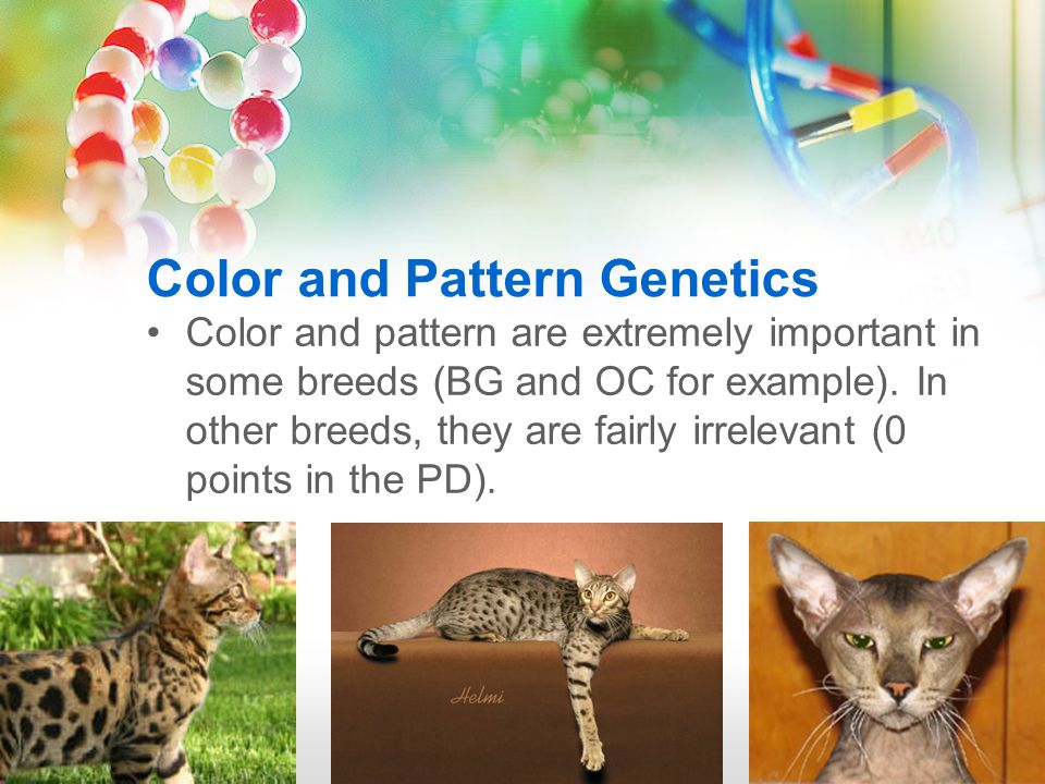 Color and Pattern Genetics Color and pattern are extremely important in some breeds (BG and OC for example).