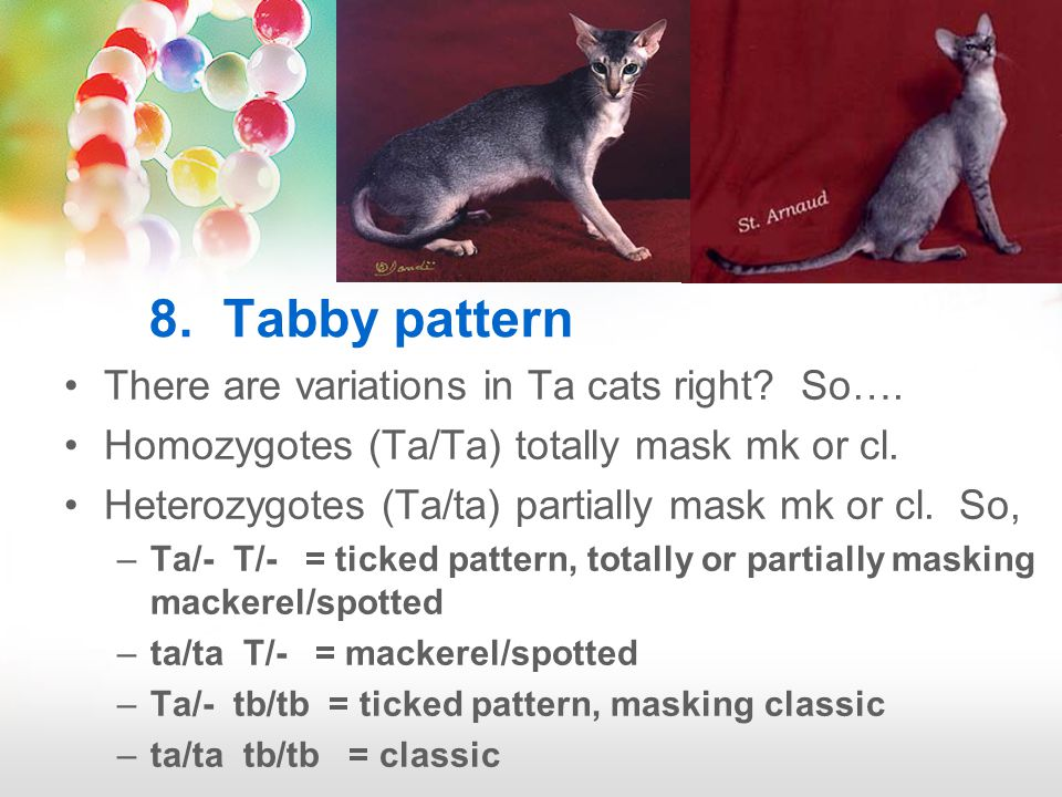 8. Tabby pattern There are variations in Ta cats right.
