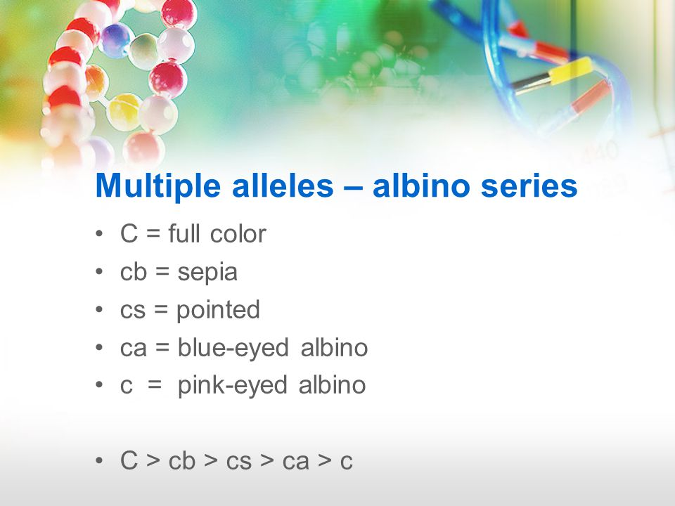 Multiple alleles – albino series The sepia alleles allow little difference between the body color and point color (cb/cb).