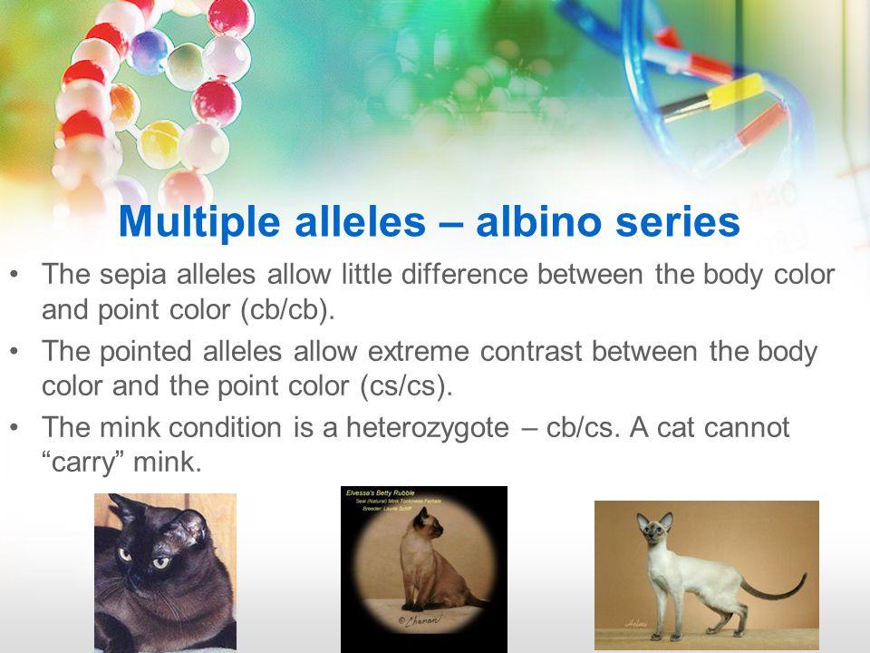 What's my genotype??.A or a. B, b, or b1. C, cs, cb.