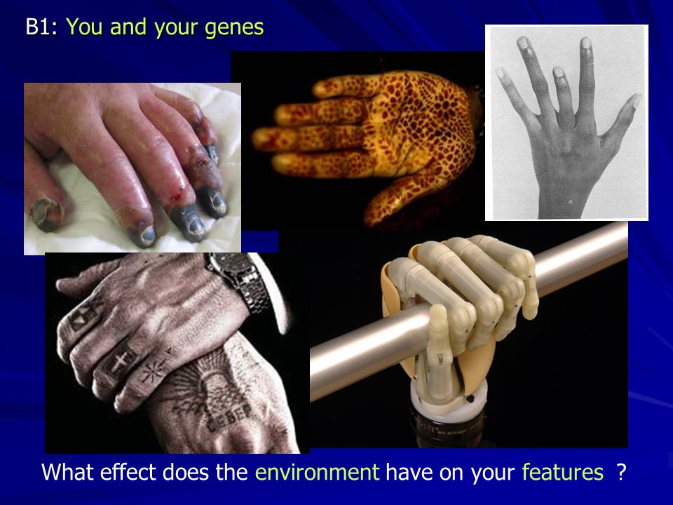 B1: You and your genes What effect does the environment have on your features