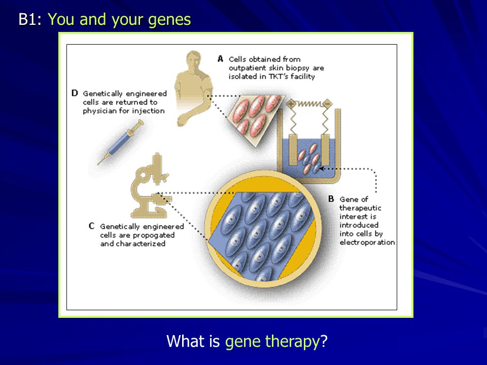 B1: You and your genes What is gene therapy