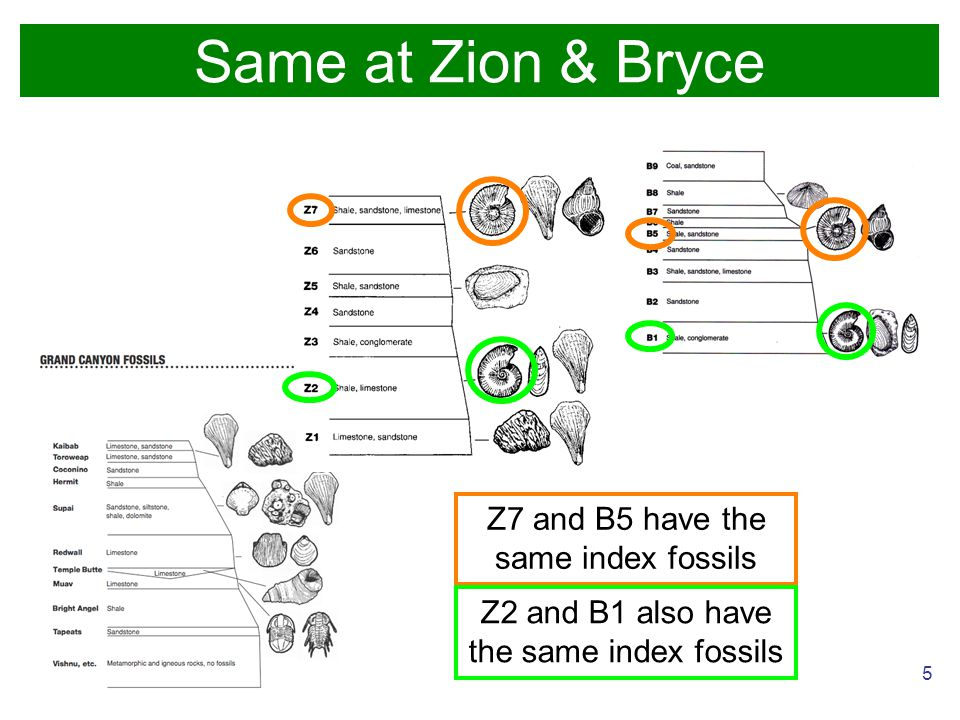 5 Z7 and B5 have the same index fossils Z2 and B1 also have the same index fossils Same at Zion & Bryce