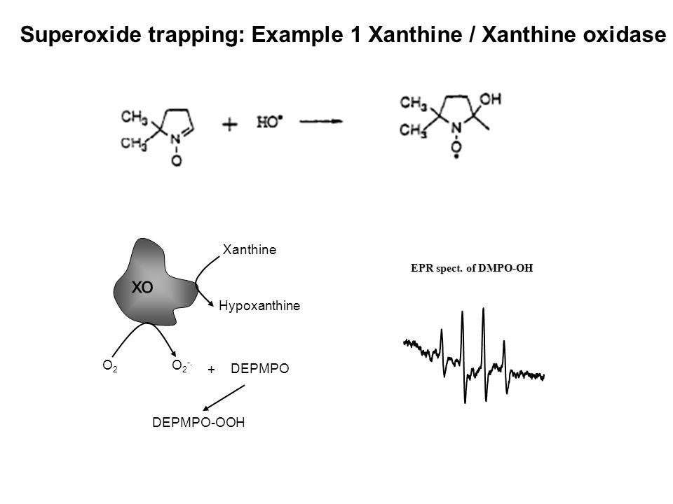 O2O2 O 2 -. DEPMPO DEPMPO-OOH Xanthine Hypoxanthine + xo EPR spect. of DMPO-OH Superoxide trapping: Example 1 Xanthine / Xanthine oxidase