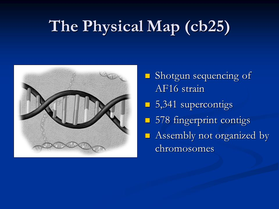 The Physical Map (cb25) Shotgun sequencing of AF16 strain Shotgun sequencing of AF16 strain 5,341 supercontigs 5,341 supercontigs 578 fingerprint contigs 578 fingerprint contigs Assembly not organized by chromosomes Assembly not organized by chromosomes