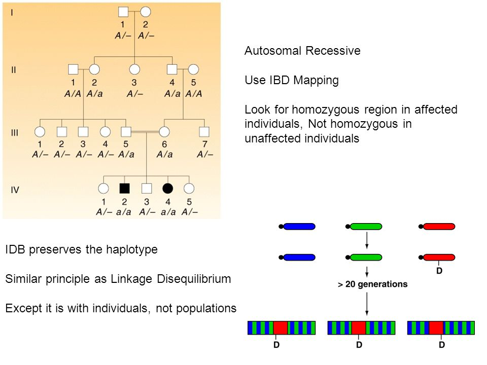 Autosomal Recessive Use IBD Mapping Look for homozygous region in affected individuals, Not homozygous in unaffected individuals IDB preserves the haplotype Similar principle as Linkage Disequilibrium Except it is with individuals, not populations