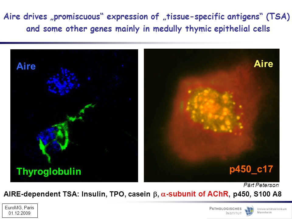 "Aire Thyroglobulin Aire p450_c17 Pärt Peterson Aire drives ""promiscuous"" expression of ""tissue-specific antigens"" (TSA) and some other genes mainly in"
