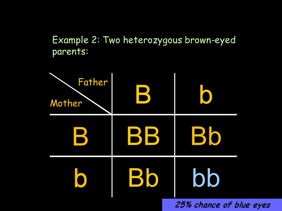 Bb B b Another method Example 2: Two heterozygous brown-eyed parents: Bb BBBb b bb Father Mother 25% chance of blue eyes