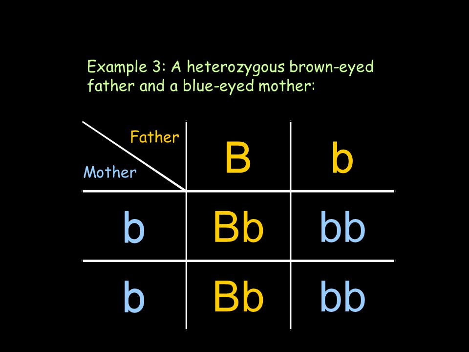 Bb b b Another method Example 3: A heterozygous brown-eyed father and a blue-eyed mother: Bb bBbbb bBbbb Father Mother
