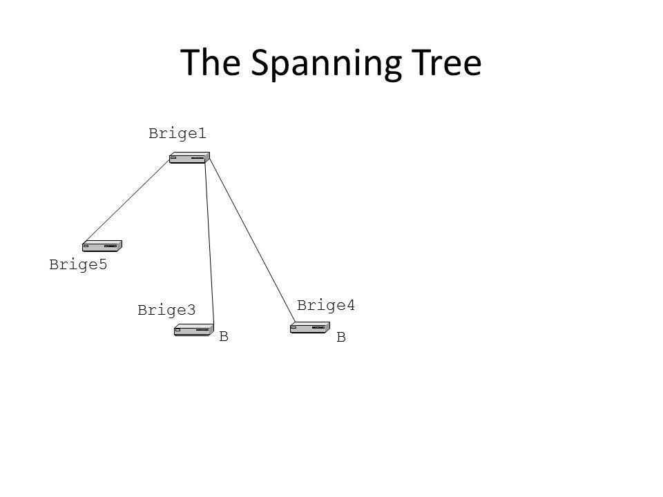The Spanning Tree Brige1 Brige5 Brige3 Brige4 B B