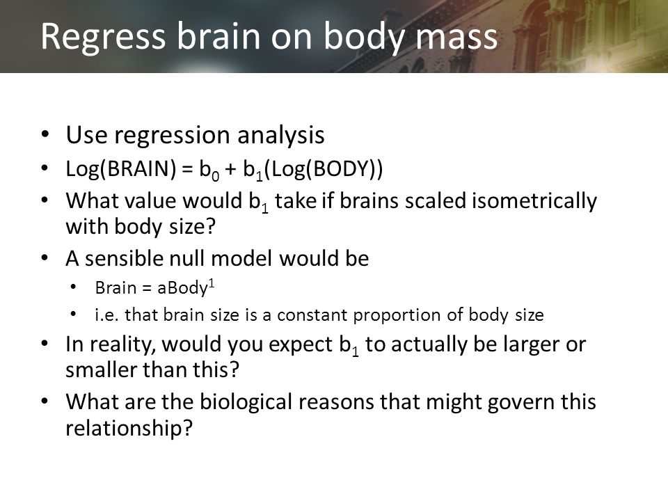 Regress brain on body mass Use regression analysis Log(BRAIN) = b 0 + b 1 (Log(BODY)) What value would b 1 take if brains scaled isometrically with body size.