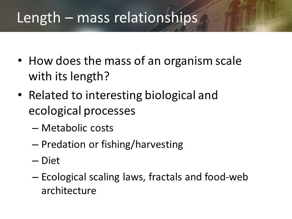 Length – mass relationships How does the mass of an organism scale with its length? Related to interesting biological and ecological processes – Metab