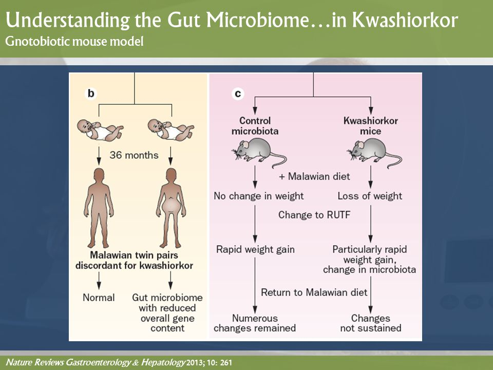 Nature Reviews Gastroenterology & Hepatology 2013; 10: 261 Understanding the Gut Microbiome…in Kwashiorkor Gnotobiotic mouse model