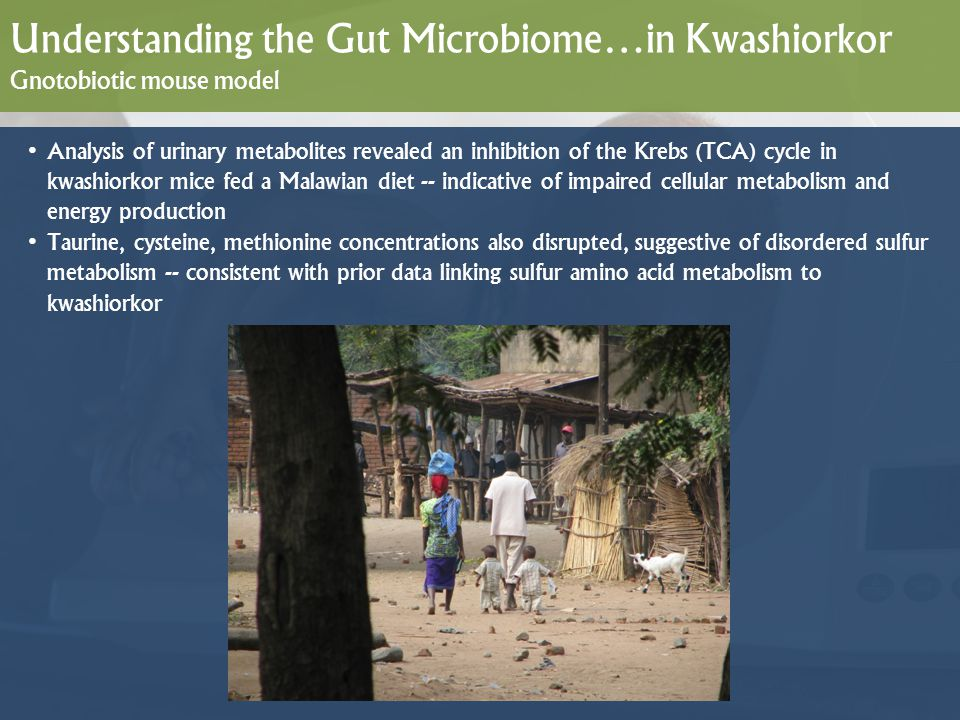 Understanding the Gut Microbiome…in Kwashiorkor Gnotobiotic mouse model Analysis of urinary metabolites revealed an inhibition of the Krebs (TCA) cycl