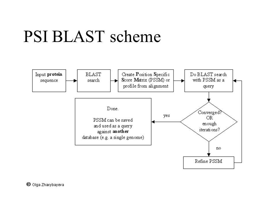 PSI BLAST scheme