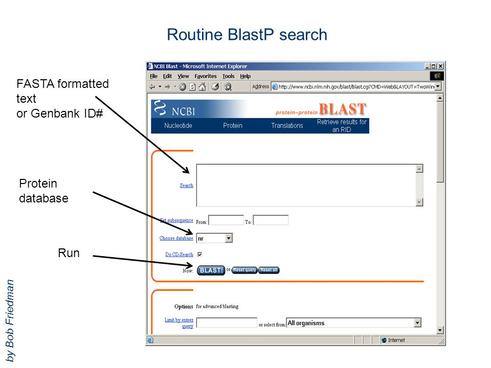 Routine BlastP search FASTA formatted text or Genbank ID# Protein database Run by Bob Friedman