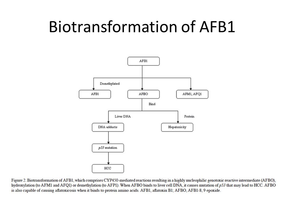 Biotransformation of AFB1