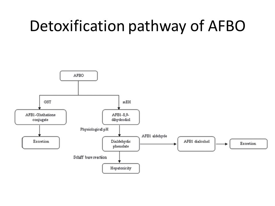 Detoxification pathway of AFBO